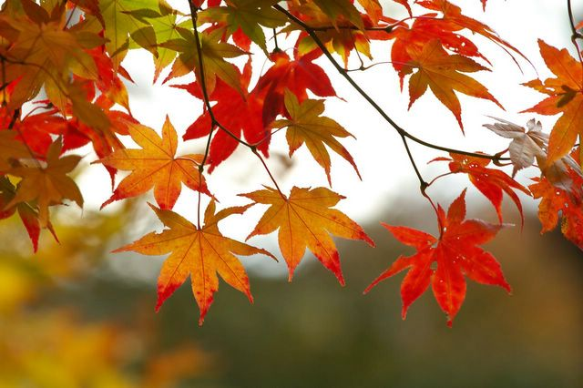 Fall-leaves[1]