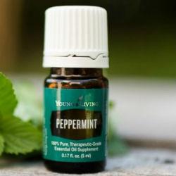 PeppermintEssentialOiledit