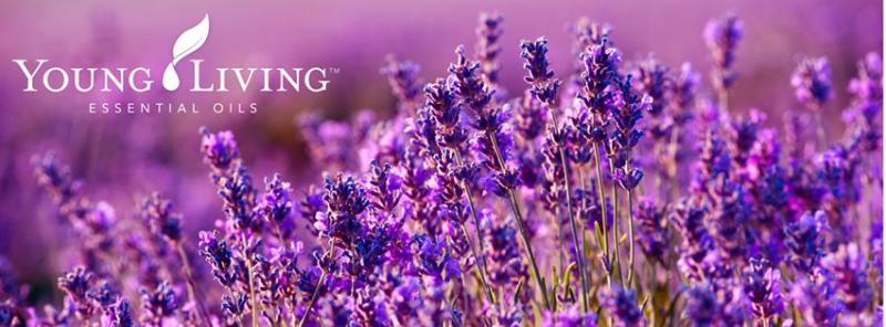 LavenderYoungLIving